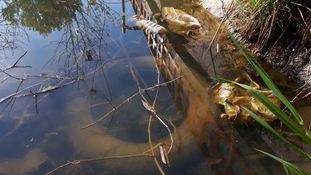 Környezetvédelmi tévhitek, problémák és lehetséges megoldások